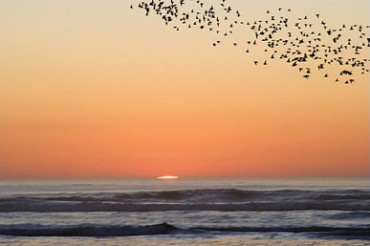 Flying Birds Sunset