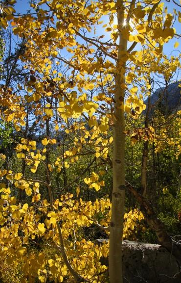Fall at Lake Sabrina