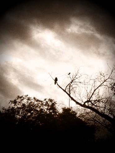 Solitary Dawn